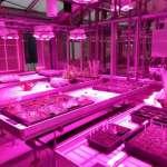 Greenhouse LED Lighting